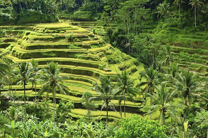 08. Bali