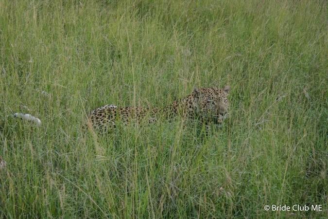 leopard5