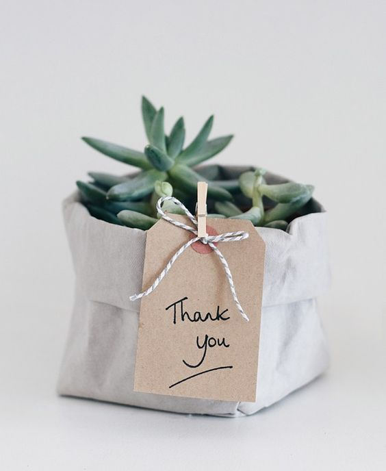 Small plant with 'thank you' sign