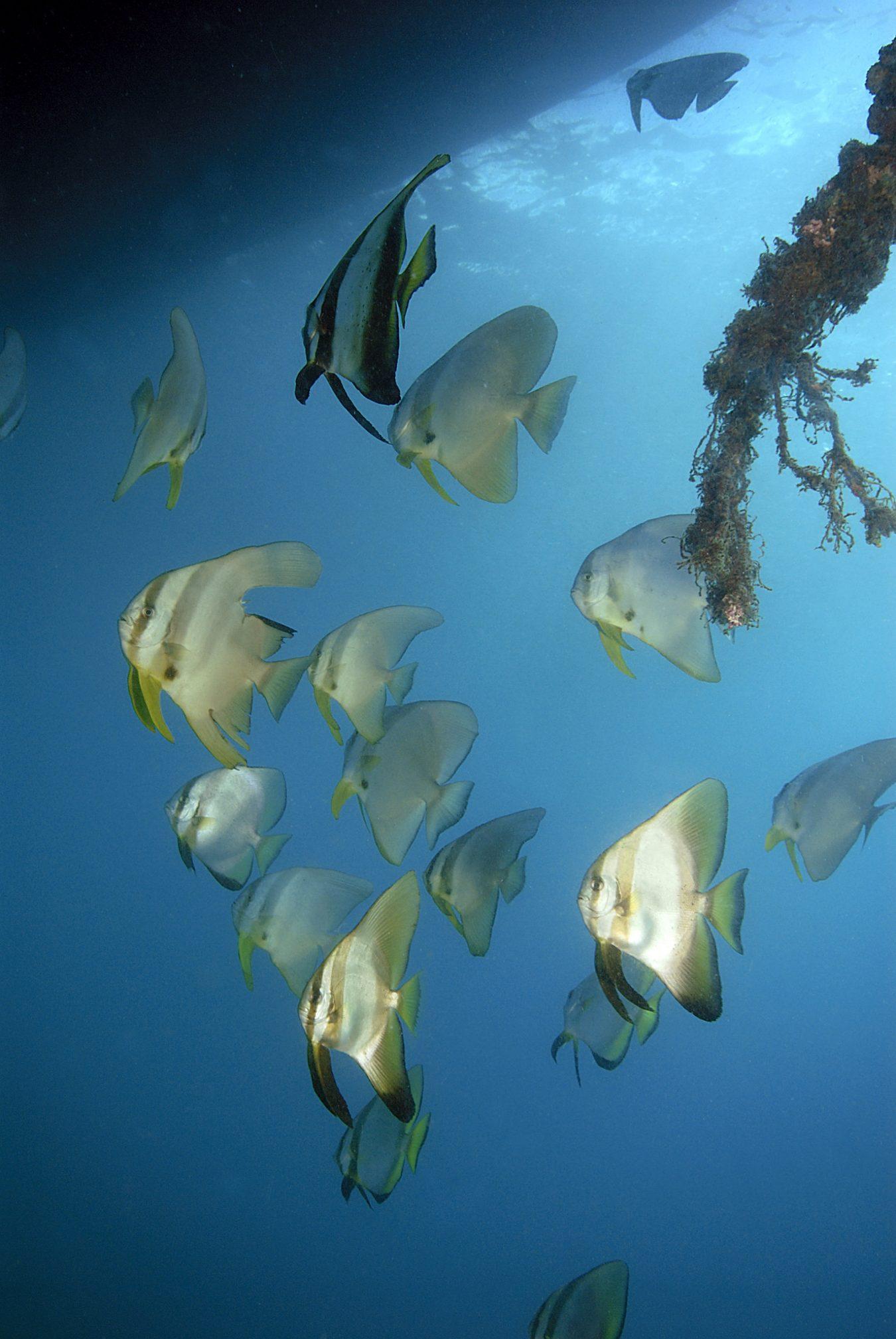 Diving at Amanwana